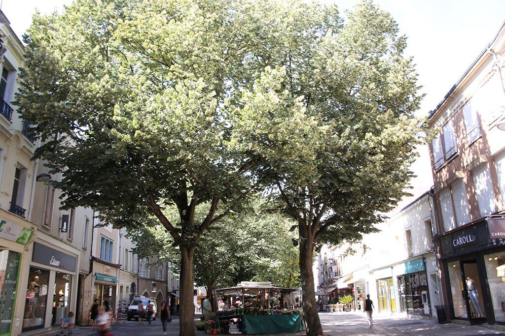 arbres des villes