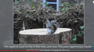 ecureuil-devant-son-arbre-legende